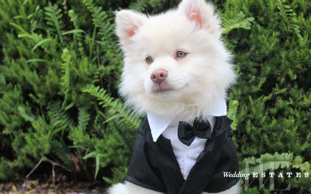 Your Dog In Your Wedding